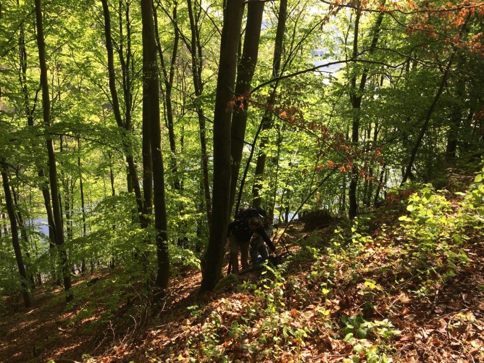 Forest, cooperation, bikes, men's academy
